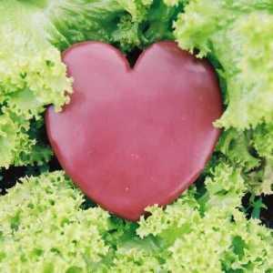 LACEYS HEART