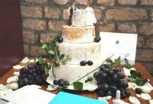 pg-8-cheese-cake-sa_231161t